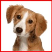 Köpek Ürünleri